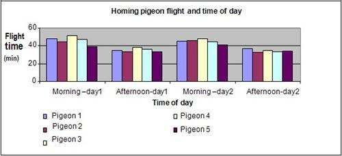 Homing pigeon science fair project
