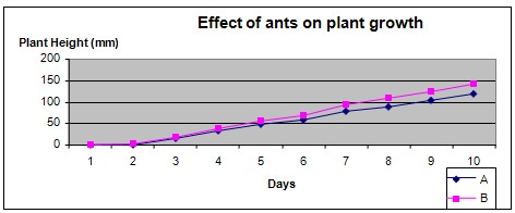 Ants and soil science fair project