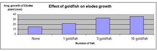 Elodea and Goldfish Science Fair Project