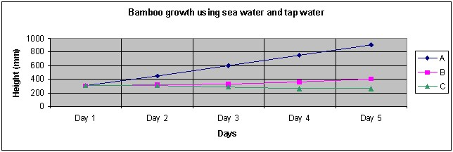 bamboo growth statistics